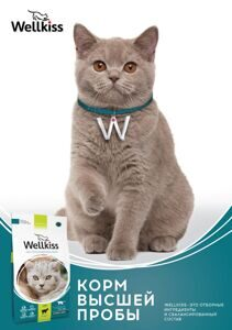 Wellkiss_poster__A5_vertic